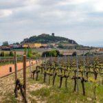 Vineyards in La Rioja Alavesa.